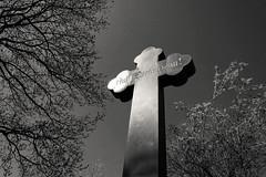 Friedhof - cemetery 015 (nemodoteles) Tags: city friedhof cemetery grave graveyard germany dead deutschland death dresden town cross saxony tomb kreuz sachsen stadt churchyard grab tot tod allemagne crux exitus