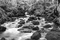 Le Dessoubre (taozoe) Tags: 20d canon river blackwhite riviere paysage lanscape noirblanc