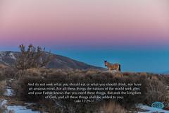 0207 IMG_4819 (JRmanNn) Tags: horse sunrise lasvegas coldcreek