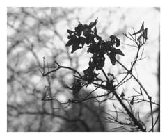 (Gene Daly) Tags: newyorkcity blackwhite canonfd50mmf18 chromenose genedaly olympusem5 p2070269