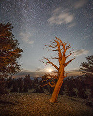 Dancing in the Moonlight (Jeffrey Sullivan) Tags: california light copyright usa tree pine night canon painting landscape photography photo august allrightsreserved 2012 bristlecone inyonationalforest ancientbristleconepineforest jeffsullivan