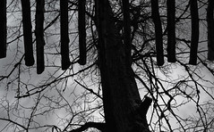 thoughts overhead (Sunofmarch) Tags: wood trees design d5100