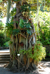 Jardin de Aclimatacion, Puerto de la Cruz (annamaart) Tags: jungle tenerife teneriffa canaryislands puertodelacruz kanariearna djungel