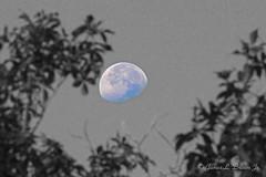 MoonTrees1w (jb5860) Tags: artisticphotos bestartistic jb5860