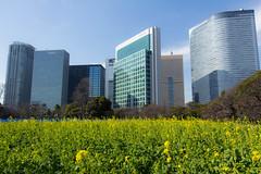 HamaRikyu (shuigao25) Tags: flowers winter tokyo hamarikyu plumblossoms teagardens