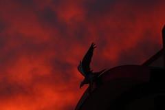 Sunset 2 18 16 #06 (Az Skies Photography) Tags: school sunset red arizona sky orange cloud sun black silhouette rio yellow statue set skyline clouds canon skyscape eos rebel gold golden high hawk salmon az rico february 18 2016 arizonasky arizonasunset 21816 riorico rioricoaz t2i rioricohighschool hawkstatue canoneosrebelt2i eosrebelt2i arizonaskyscape 2182016 february182016