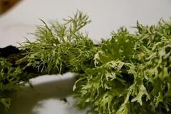 Ramalina farinacea a sinistra ed Evernia prunastri a destra