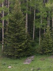 Farley Wildflower Overlook (jaygannett) Tags: colorado farley cordova cuchara huerfano