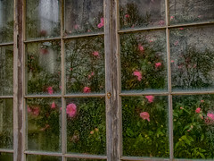 Yorkshire Sculpture Park (Reynard_1884) Tags: uk flowers england window olympus camellia westyorkshire refelection yorkshiresculpturepark sculpturepark westbretton em5 mirrorless microfourthirds micro43rds mu43 olympusomd olympusomdem5