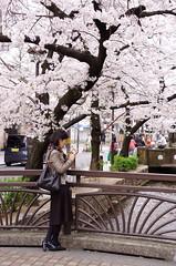 (Sharpness-1) Tags: japan cherry kyoto blossom    kiyamachi
