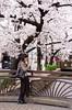 木屋町 (Sharpness-1) Tags: japan cherry kyoto blossom 京都 🌸 さくら kiyamachi