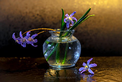 after the rain (Fay2603) Tags: flowers blue light orange brown green nature wet water blossom vase waterdrops stalk glas
