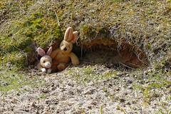 Watership Down 04 -Hazel und Fiver_Web (berni.radke) Tags: moon rabbit bunny river mond hazel raft buck fluss apollo watershipdown kaninchen fiver photostory pitfall flos rammler cony seepferd falle lachmwe kehaar richardadams enborne wildkaninchen untenamfluss