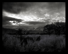 Approaching Storm Over Eastern Sierras (Eric C Bryan) Tags: california trees sunset blackandwhite storm mountains film monochrome clouds landscape meadow 8x10 bishop ilford fp4 largeformat easternsierras selenium buttermilkroad