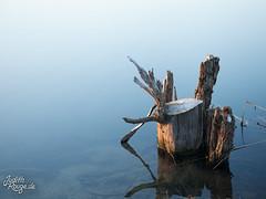 Gradient I (judithrouge) Tags: blue white lake water see evening wasser minimal gradient trunk blau abendlicht weis baumstumpf farbverlauf