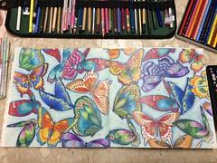 Buterflyes (isabelavistue) Tags: borboletas carandache coloringbooks coloringpencils parasotropical tropicalwonderland milliemarotta