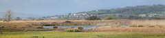 Brading Marshes (sunnyisle) Tags: birds reeds isleofwight marshland wight brading bembridge marshes wildife