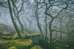 Conversation (J C Mills Photography) Tags: wood trees light england mist rock woodland landscape moss spring derbyshire peakdistrict boulders lichen oaktree gritstone sessileoak
