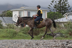 IMG_EOS 7D Mark II201604039664 (David F-I) Tags: horse equestrian horseback horseriding trailriding trailride ctr tehapua watrc wellingtonareatrailridingclub competitivetrailriding sporthorse equestriansport competitivetrailride april2016 tehapua2016 tehapuaapril2016 watrctehapuaapril2016