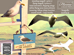 TLC100% MESH seagulls, standing and flying version, animated, follow function, sound on/off, copy modify (- TRUE & LAUTLOS CREATIONS -) Tags: life seagulls bird birds animal mesh wildlife seagull gull gulls sl secondlife second animated tlc