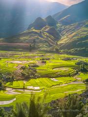 _MG_1125 M Cang Chi.Yn Bi 0611 (HUONGBEO PHOTO) Tags: sunset mountain beautiful landscape asian photography asia ray village outdoor hill terraces bamboo valley sunrays sunbeam flank phongcnh ni cytre ynbi vietnamlandscape ngoitri ngni rungbcthang mcangchi thunglng cnhquan tianng macy manc lmmng