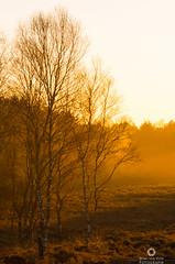 A secret place (Marc.van.Veen) Tags: light fog pentax magic diffused k50 nationaalparkveluwezoom marcvanveen