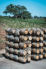 20160423-_DSC8600.jpg (Jorge A. Martinez Photography) Tags: family green fun nikon day wine weekend sunny hills tasting fx pasorobles jada sextant d610 lecuvier sigma24105 turrley