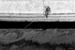 Fumando espero (impodi@gmail.com) Tags: travel bw bn egipto luxor pescador nilo