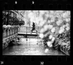 Hanami (a Udine) (danielesandri) Tags: primavera olympus zuiko hanami 135mm udine fomapan