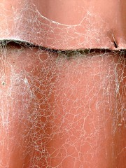 image (#avril#) Tags: pink iron cobweb