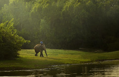 The elephant hometown (SaravutWhanset) Tags: sunlight elephant animal asian asia forrest explore ethnicity afarica