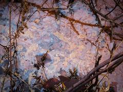 Rusty water (Matt J Dale) Tags: water rust foliage iridescence chemical