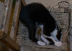 DSC_0115 (Bela Putriche Fotografia) Tags: family dog love co animal familia cat de amor interior gato cachorro cachorros bichos animais filhos filhote babycat cani estimao adoo adote nocompreadote