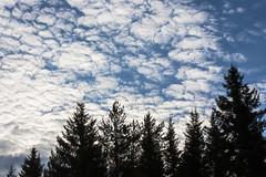 Весеннее небо