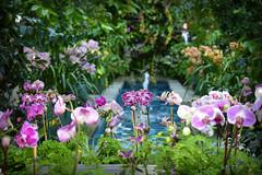The Garden of Eden (Photato Jonez) Tags: flowers color alex nature fountain gardens botanical dc washington flora nikon day botany d3300