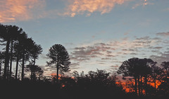 (diadelluvia) Tags: chile sunset sky contraluz atardecer sur araucaria region novena melipeuco diadelluvia