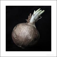 0ni0n (rich lewis) Tags: macro vegetable onion macrophotography richlewis
