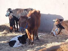 P4162069 (t_y_l) Tags: morocco marokko tinghir suq 2016 tinerhir