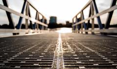 Can you walk on water? (Mystikopoulos) Tags: city bridge macro building water closeup river bokeh ottawa cit