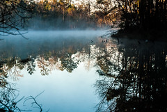 218:365 Cold morning mist (Woodlands Photog) Tags: morning trees mist lake cold nature water reflections
