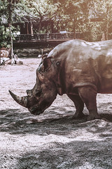 Power   (Yuri Bonato) Tags: light detail valencia animal spain perfect mine power great rhino impressive greatness bioparc