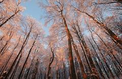 20150106-069F (m-klueber.de) Tags: winter kreuzberg morgen hohe rhn 2015 hochrhn mkbildkatalog 20150106 20150106069f