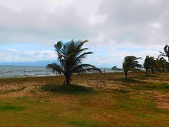 Wind again....... (denise.bardauil) Tags: sea sky cloud beach nikon wind digitalart palmtree