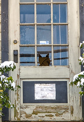 cat through the window (dfbphotos) Tags: winter usa cats house newjersey nj places pa february 2016 buildingsarchitecture animalsdomestic