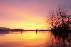 Sunrise Syrup (ewan_bnd) Tags: silhouette sunrise scotland scenery unitedkingdom gb loch lochlomond luss