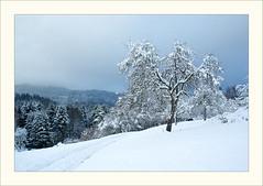 DSCF2979 (Frank Dpunkt) Tags: winter fujifilm murgtal sigma2418 s5pro