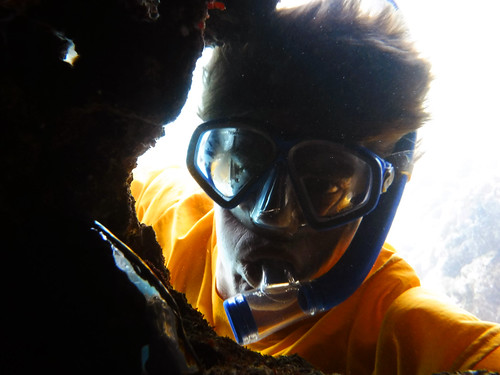 Sharks Cove 2015 19