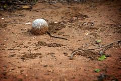 tnis (Raphael R. Pais) Tags: old field ball dirt tennis end lama tnis