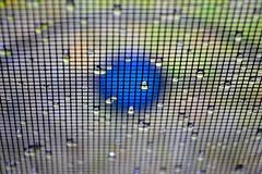 screen drops blue spot (donjuanmon) Tags: blue droplets drops screen raindrops sliders hss slidersunday donjuanmon