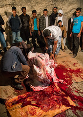 slaughter of a bull during a wedding, Qeshm Island, Tabl , Iran (Eric Lafforgue) Tags: wedding people men childhood animal vertical kids night children religious outdoors cow blood asia kill iran killing muslim islam traditional ceremony knife culture traditions marriage persia folklore meat celebration butcher tabi arab slaughter custom groupofpeople cultures cultural sacrifice islamic middleeastern persiangulf cruel sunni qeshmisland menonly hormozgan tabl  bandari  5people  iro straitofhormuz  colourpicture  irandsc02883